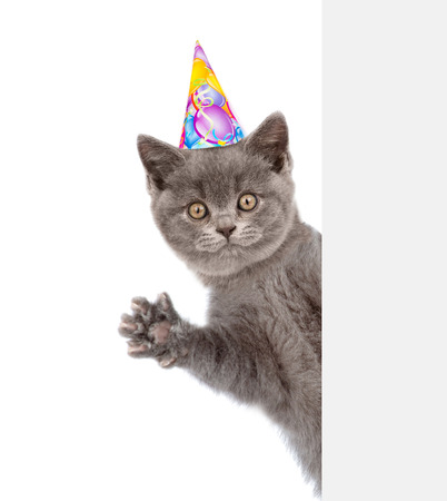 celebrate: ?at in birthday hat peeks out from behind a banner and waving his paw.