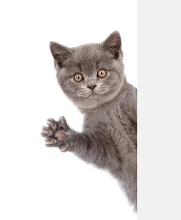 고양이 배너 뒤에서 peeks와 그의 발을 흔들며.