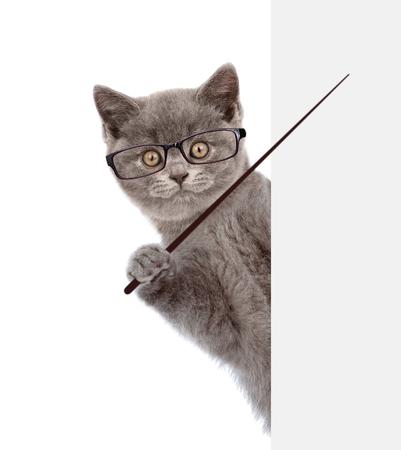 Katze trägt eine Brille mit einem Zeigestock und Punkte auf leeren Banner. isoliert auf weißem Hintergrund.