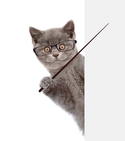 Cat wearing glasses holding a pointing stick and points on empty banner. isolated on white background.