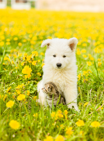 dandelion field: Kitten and puppy sitting together on a dandelion field. Stock Photo