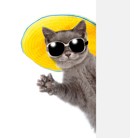 Cat in sunglasses and hat peeking from behind empty board and waving his paw. isolated on white background.