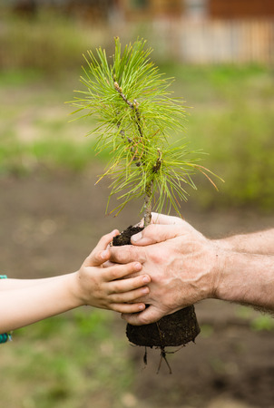 adult hand: Senior man and baby holding young tree.