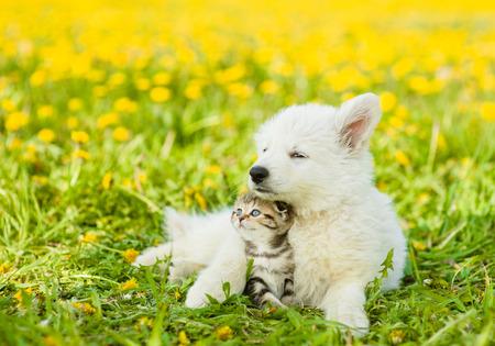 dandelion field: Cute puppy hugging a kitten on a dandelion field.