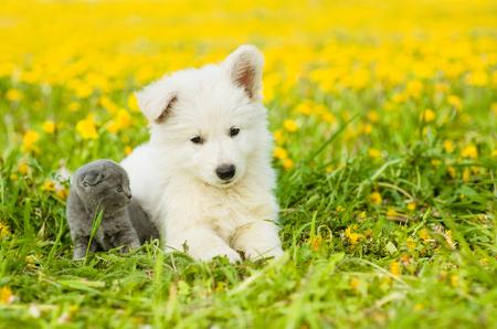 summer dog: Puppy and kitten on dandelion field.