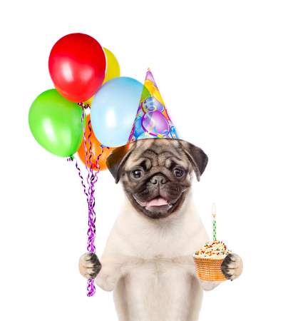 carlin: Dog in birthday hat holding balloons and cake. isolated on white background