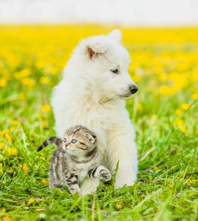 dandelion field: Puppy and kitten sitting together on a dandelion field.