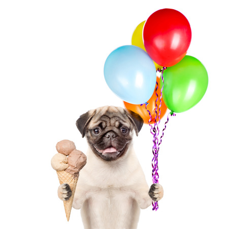 carlin: Dog holding balloons and ice cream. isolated on white background. Stock Photo