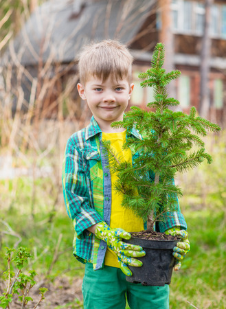 spruce: Boy with tree seedling in hands. Stock Photo