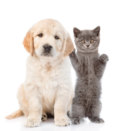 petting: Kitten petting a puppy behind the ear. isolated on white background.