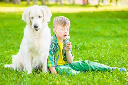 blowing dandelion: Boy with golden retriever dog blowing dandelion.