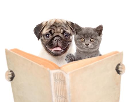 パグ子犬と子猫持株本。白い背景上に分離。