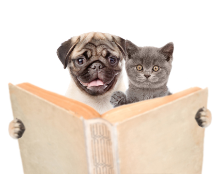 Pug puppy with kitten holding open book. isolated on white background.