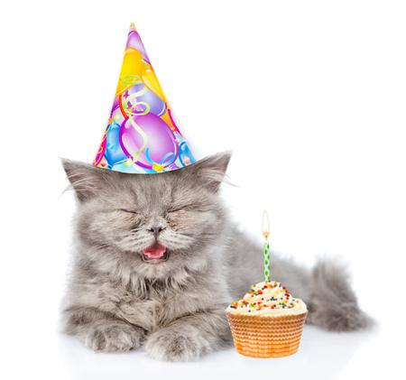 highlander: Happy Scottish highlander cat in birthday hat. Isolated on white background. Foto de archivo
