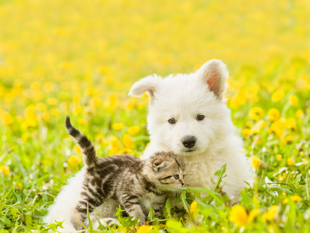Cat and dog together on a dandelion field.
