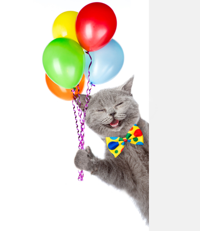 Happy Cat holding balloons and peeking from behind empty board. isolated on white background.