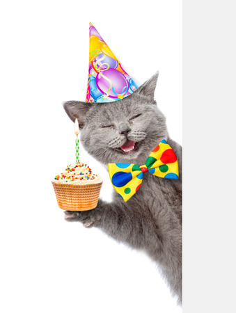 Happy cat in birthday hat with cupcake holding a pointing stick and points on empty banner. isolated on white background.
