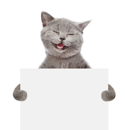 Smiling cat holding a white banner. isolated on white background. Foto de archivo