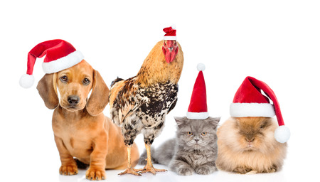 Large group of pets in red christmas hats. isolated on white background Stock Photo
