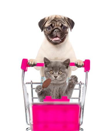 고양이가 앉아있는 쇼핑 카트를 밀고 퍼그 강아지. 흰색 배경에 고립.