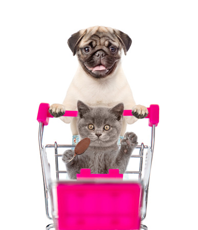 Pug puppy pushing a shopping cart, in which a cat sitting. isolated on white background.