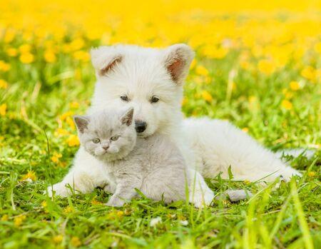 Cachorro abrazando gatito en el césped de dientes de león.