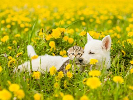 Welpen und Kätzchen liegen zusammen auf einem Löwenzahn Feld.