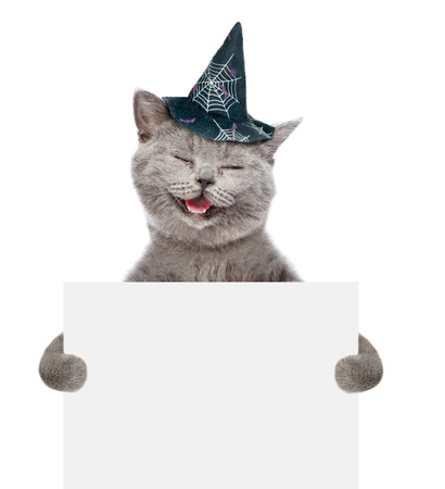 smiling cat: Smiling cat in hat for halloween holding a white banner. isolated on white background.