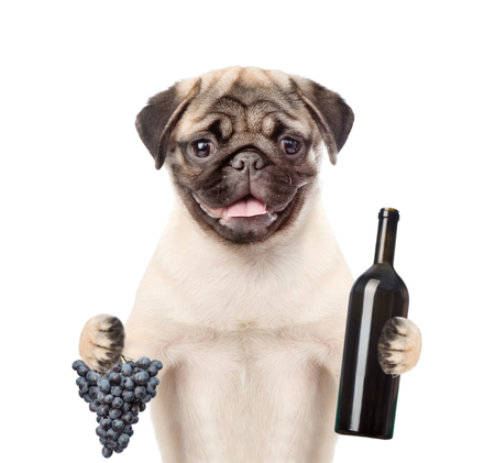 carlin: dog holding red wine and grape. isolated on white background.