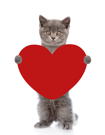 paramour: Cat holding red heart. isolated on white background.