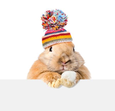 Konijn dat een warme hoed draagt ??die over een uithangbord kijkt. Geïsoleerd op witte achtergrond