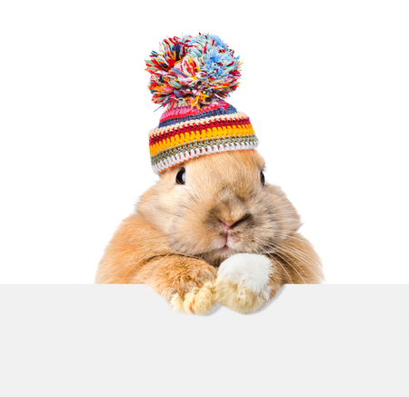 Rabbit  wearing a warm hat looking over a signboard. Isolated on white background.