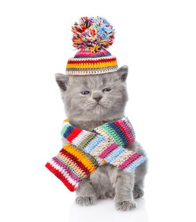 perros vestidos: gatito lindo que lleva una bufanda y un gorro con pompón. aislado sobre fondo blanco. Foto de archivo