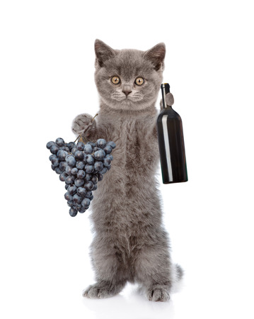 white cat: Cat holding a bottle of red wine and grape. isolated on white background.