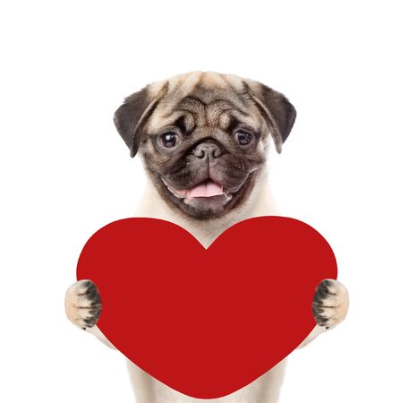 Puppy holding red heart. isolated on white background.