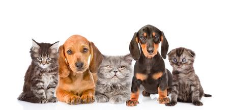 行に座っている犬や猫のグループ。白い背景上に分離。