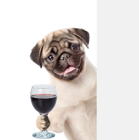 Dog holding a wineglass behind a white and blank banner. isolated on white background. Stock Photo