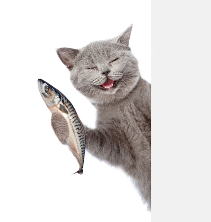 Happy cat holding a fish in its paw and peeking from behind empty board. isolated on white background.