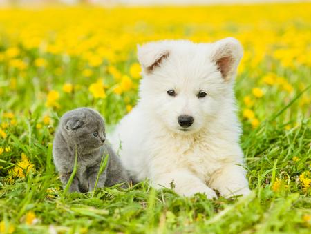 dandelion field: Cute puppy and kitten lying together on dandelion field.