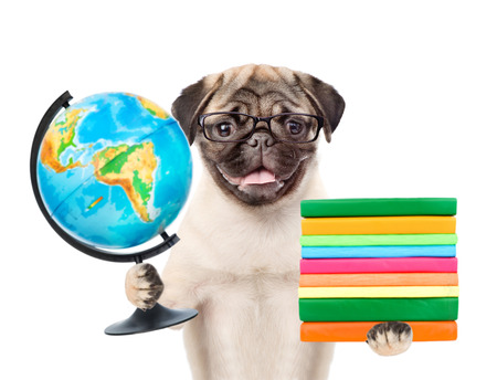 carlin: Pug puppy in eyeglasses holding books and globe. isolated on white background.