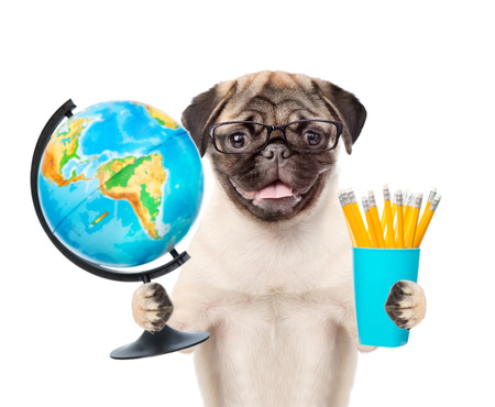 Pug puppy in eyeglasses holding globe and pencils. isolated on white background. Stock Photo