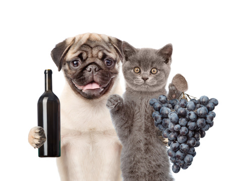 glass of red wine: Puppy and kitten holding a bottle of red wine and bunch of grapes. Isolated on white background. Stock Photo