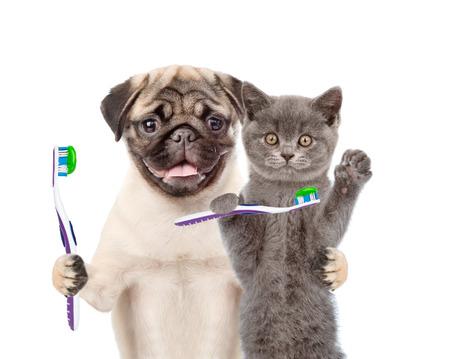 子犬と歯ブラシと子猫。白い背景上に分離。