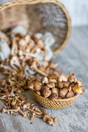 wooden basket: honey fungus in basket on wooden table.