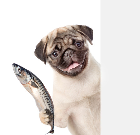 Dog holding a fish in its paw and peeking from behind empty board. isolated on white background.