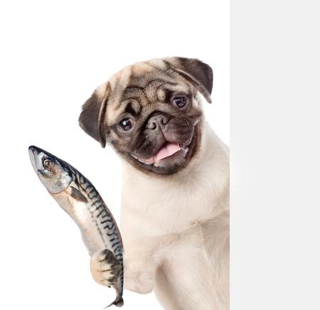 Perro que sostiene un pescado en su pata y asomándose desde detrás de la tarjeta vacía. aislado en el fondo blanco.