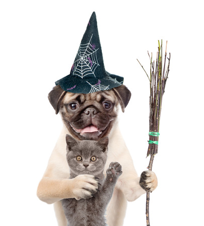 Cat and Dog in hat for halloween holding witches broom stick. isolated on white background.