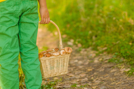 holding close: Close up child holding a basket with mushrooms. Stock Photo