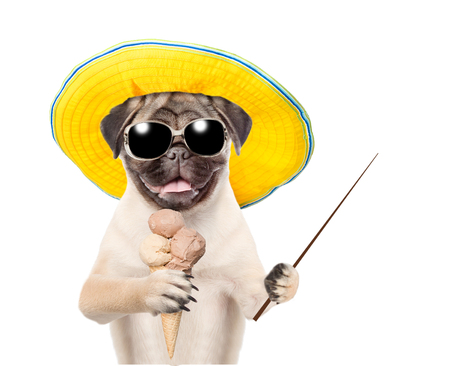ice cream on stick: Funny summer dog in sunglasses and hat holding ice cream and holding a pointing stick. isolated on white background.