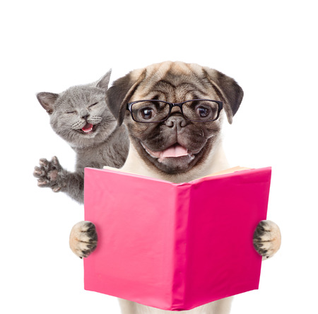 Smart dog and funny cat reading a book. isolated on white background.